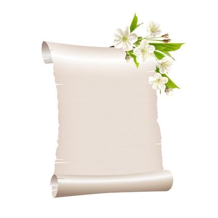 ramo di ciliegio: Scorrere carta bianca con fioritura ramo di ciliegio isolato su sfondo bianco illustrazione Vettoriali