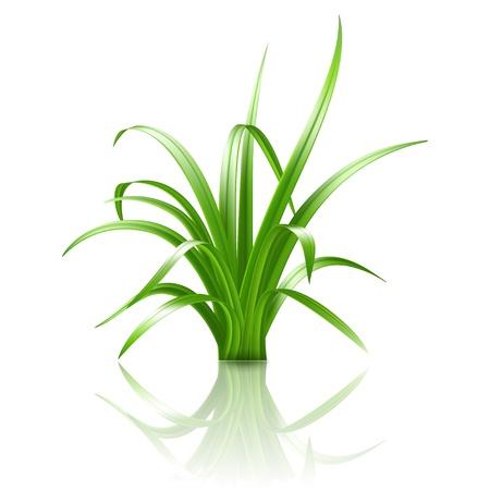 Green grass, vector illustration Stock Vector - 19422428