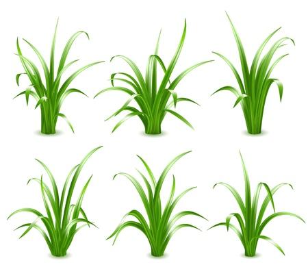 grass land: Conjunto de hierba verde, ilustraci�n vectorial Vectores