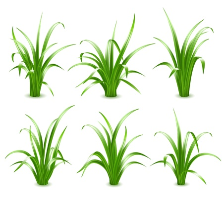 grass blades: Set of Green grass, vector illustration