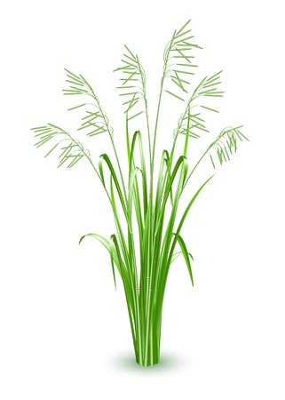 Green grass, vector illustration Stock Vector - 19692197