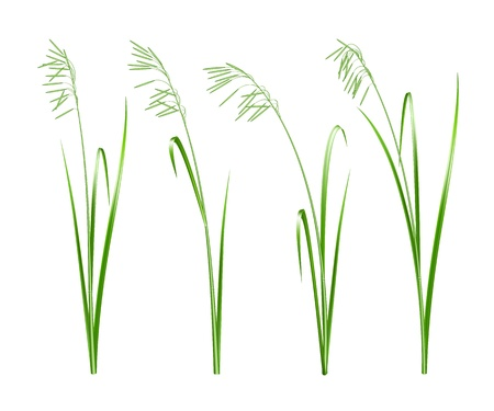 Green grass,  illustration Stock Vector - 19692194