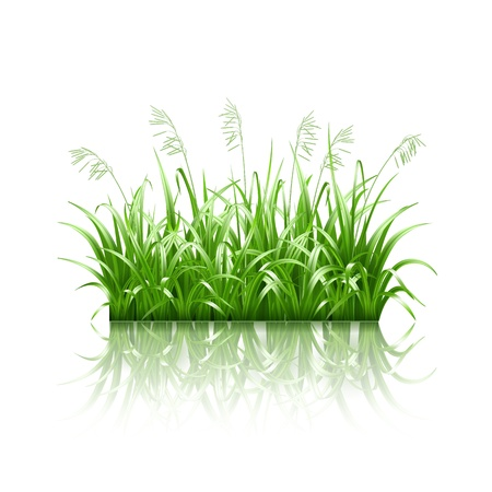 Green grass,  illustration Stock Vector - 19692192