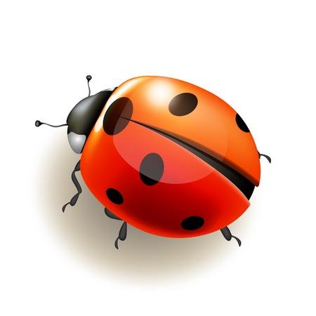 pajaro caricatura: Ladybird sobre fondo blanco Ilustración