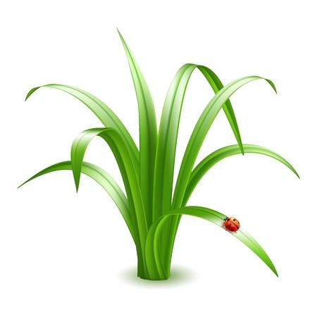 lady beetle: Ladybird on grass  illustration  Illustration