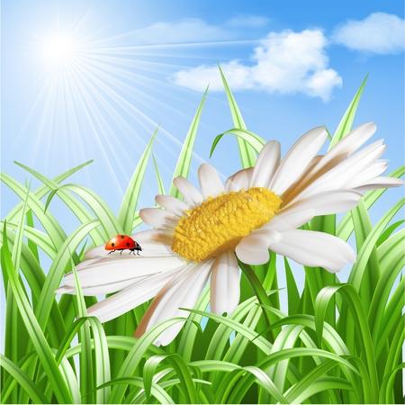 daisy vector: Summer background - Ladybird on daisy flower  Vector illustration