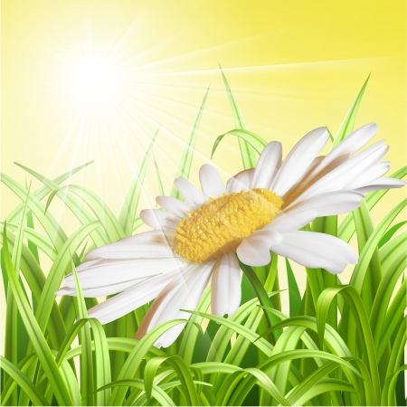 Green grass with daisy - summer background  Vector illustration Vector