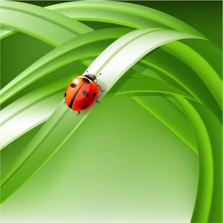 macro leaf: ladybug on grass  vector illustration