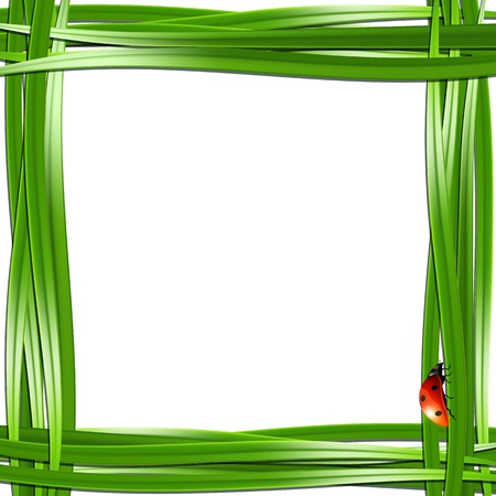 lady bug: Grass frame with ladybugs  Vector illustration