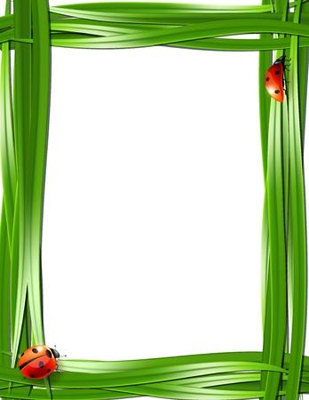lady bug: Grass frame with ladybugs  Vector illustration