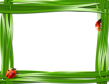 Grass frame with ladybugs  Vector illustration