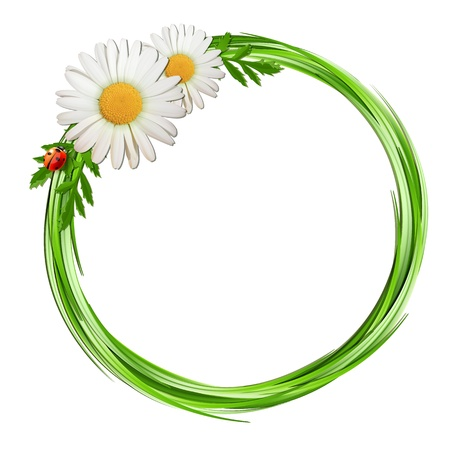 Grass frame with daisy flowers and ladybug   Vector illustration Stock Vector - 19871785