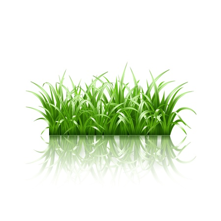 grass illustration: Green grass, vector illustration