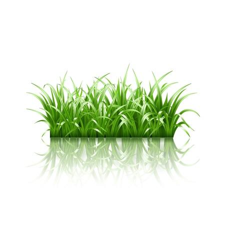 grass vector: Green grass, vector illustration