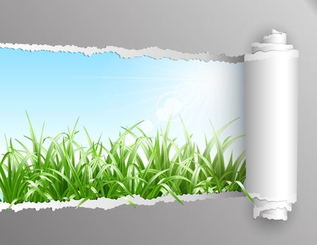 The window in the summer. Torn paper with opening showing summer background with grass. Vector illustration Vector
