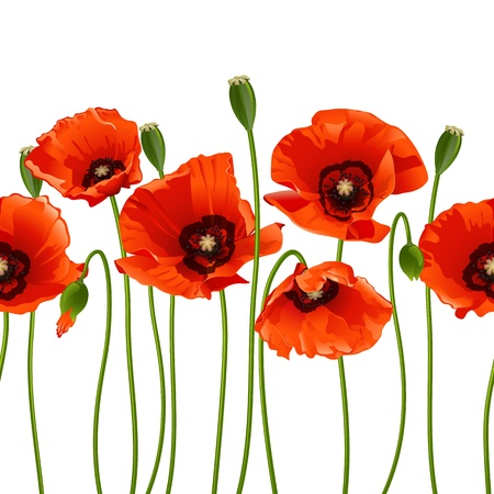 poppies: Red poppies in a row. Isolated on white background. Vector illustration