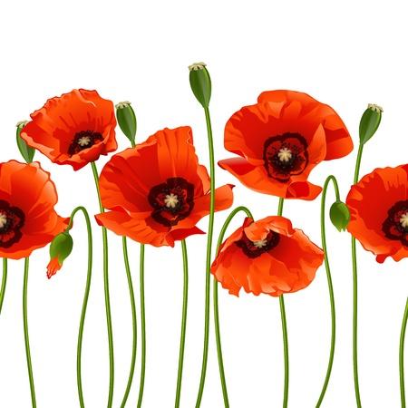 Rote Mohnblumen in einer Reihe. Isoliert auf weißem Hintergrund. Vektor-Illustration