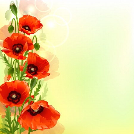 red poppies on green field: Poppy background. Vector illustration