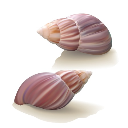 Seashells isolated on white background. Vector illustration Vector