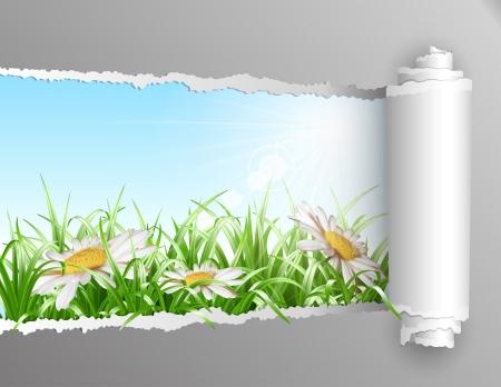 여름에 창. 잔디와 데이지 꽃으로 여름 배경을 표시하는 열기와 찢어진 종이. 벡터 일러스트 레이 션 일러스트