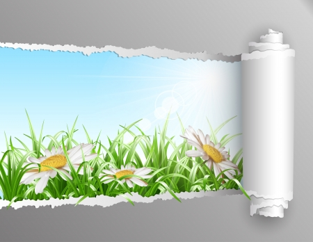 The window in the summer. Torn paper with opening showing summer background with grass and daisy flowers. Vector illustration Ilustracja