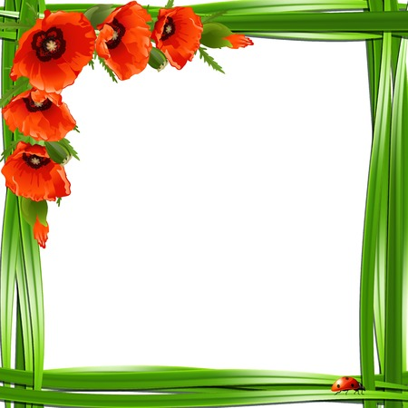 herbage: Floral frame with red poppies and ladybirds. Vector background