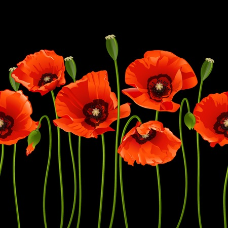 Red poppies in a row on black background. Vector illustration