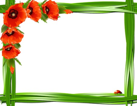 herbage: Floral frame with red poppies and ladybirds. Vector  Illustration