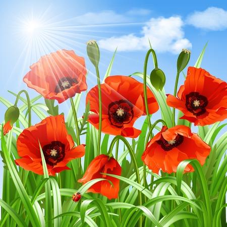florescence: Red poppies in grass. Vector illustration Illustration