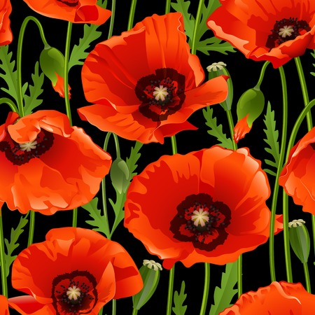 Poppy seamless pattern on black. Vector illustration Vector