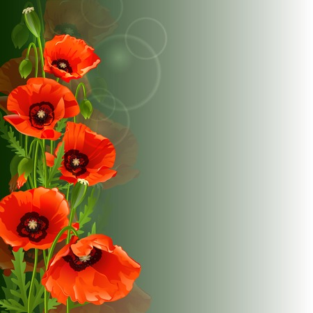 red poppies on green field: Floral background with red poppies. Vector illustration