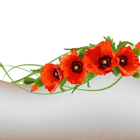 amapola: Floral con amapolas rojas. Ilustración vectorial
