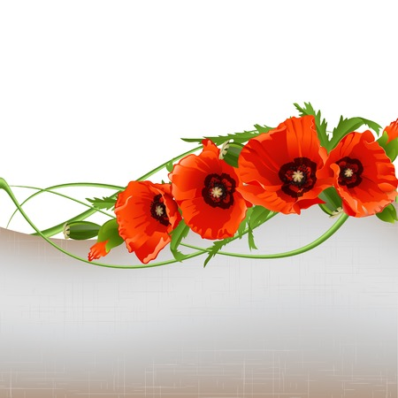 red poppies on green field: Floral with red poppies. Vector illustration