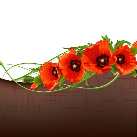 Floral background with red poppies illustration Vector