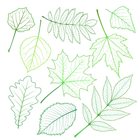 nettle: Collection of green spring leaves. Vector illustration