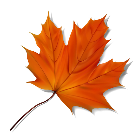 Orange maple leaf on white background. Illustration