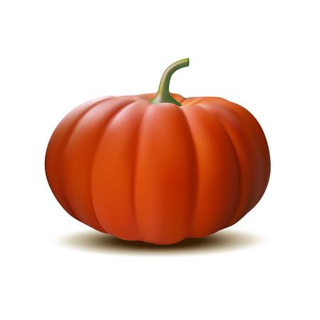 Orange realistic pumpkin isolated on white background, Harvest Thanksgiving symbol. Vector illustration