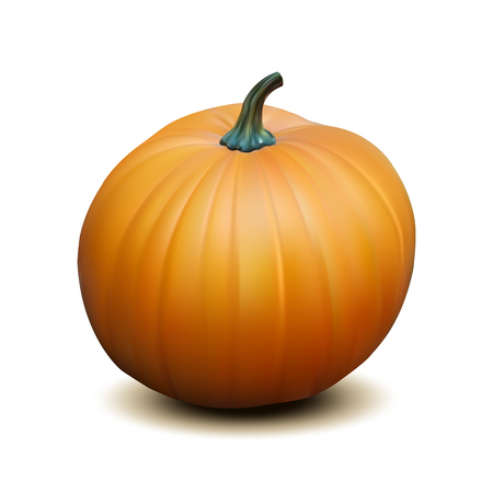 photorealism: Orange realistic pumpkin isolated on white background, Harvest Thanksgiving symbol. Vector illustration