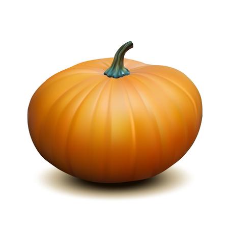 photorealism: Orange realistic pumpkin isolated on white background, Harvest Thanksgiving symbol. Vector illustration