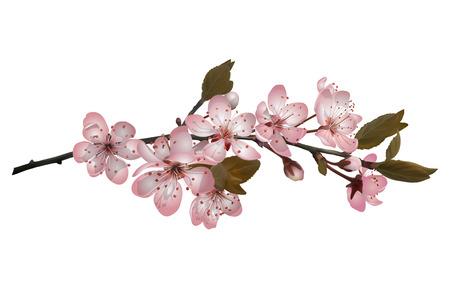 Sakura flores de fondo Foto de archivo - 95842292