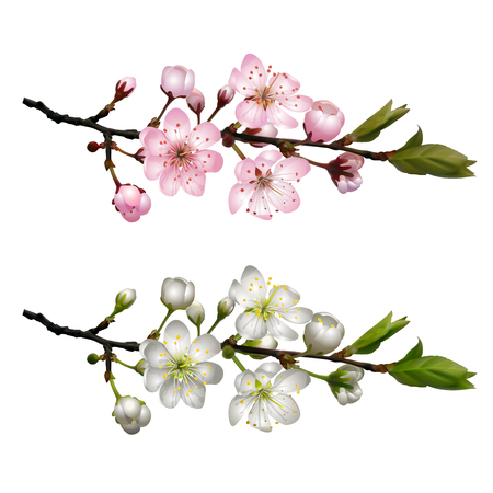 Set of blossoming cherry branches. Stock Illustratie