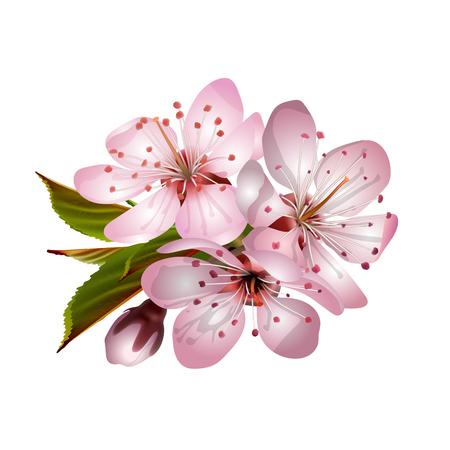 Spring pink sakura blossoms. Illustration