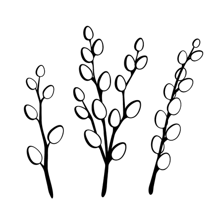 Willow twigs in black isolated on white