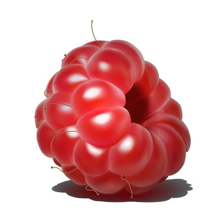 Raspberry. Sweet fruit. 3d realistic vector icon Иллюстрация