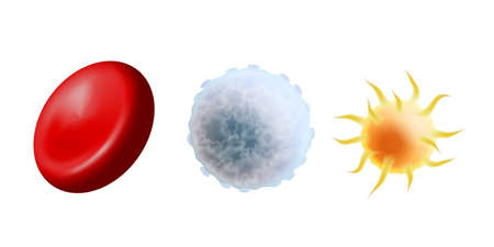Main blood cells in scale - erythrocyte, thrombocyte and leukocyte. Red blood cell, white blood cell and platelet isolated on white background. Vector illustration
