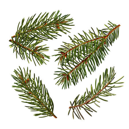 Set of Green branches of a Christmas tree