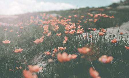 fashioned artistic flower in field Stock Photo