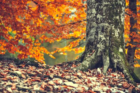 autumn color leaves under tree with leaves
