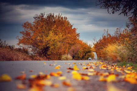 Colorful leaves on the road in autumn Imagens - 128906856