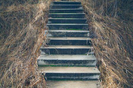 Wooden steps through dune grass